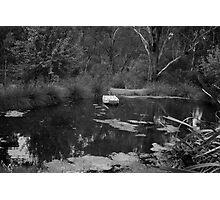 Lake at Watson's Creek  Photographic Print