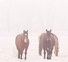 Equine Frost by Charles Tribbey