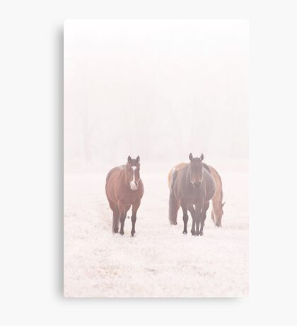 Equine Frost Metal Print