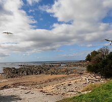In Flight, Sulphur Rocks, Tasmania, Australia. by kaysharp