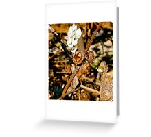 Nuts about Australian Nuts Greeting Card