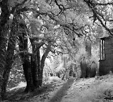 Waldheim Chalet - Cradle Mountain by Mel Brackstone