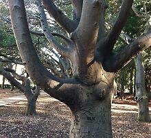 Berkeley tree by Julie Van Tosh Photography