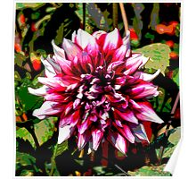 Dahlia Blooming Poster