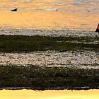 Beach combing at low tide   -  Philipinnes by suellewellyn