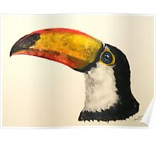 """Toco Toucan"" Poster"
