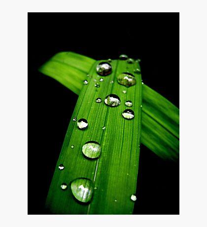 November Rain Photographic Print