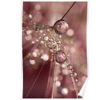 Raspberry Dandy Sparkles Poster
