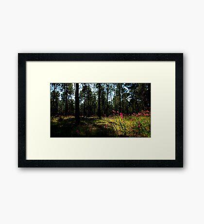 Forest In Bloom Framed Print