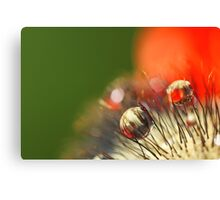 Poppy Drop Abstract Canvas Print