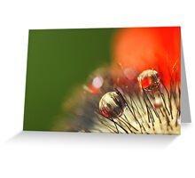 Poppy Drop Abstract Greeting Card