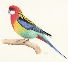 Eastern Rosella by Catherine Gabriel
