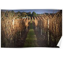 Vineyard at Last Light Poster
