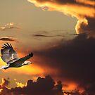 Perfect Heavens by byronbackyard