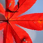 Red Leaf by Tim Beasley