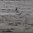 Crow In Sole Majesty on the Beach by ArtOfE