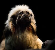 Blow Dried and Proud by Tom Migot