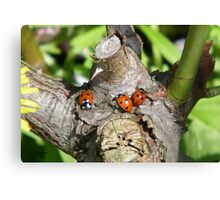 Trio of Ladybirds Canvas Print