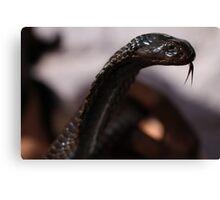 The Snake charmer's snake. Canvas Print