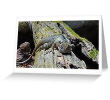 Watchful Lizard Greeting Card