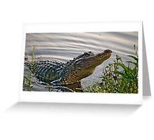 HDR Alligator Greeting Card