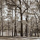 Trees of the Park-B&W by henuly1