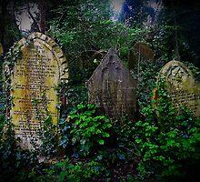 Abney Park Cemetery by Carsten  Ottesen