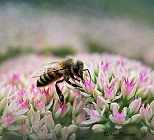 August Bee by KatMagic Photography
