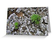 Lichen & Succulents Greeting Card