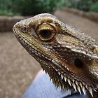 Ben the Bearded Dragon by nellie11