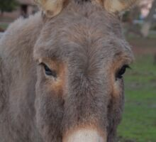 Donkey business Sticker