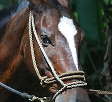 Beautiful horse by mechelle142
