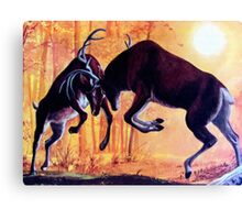 Deer Fight  Canvas Print