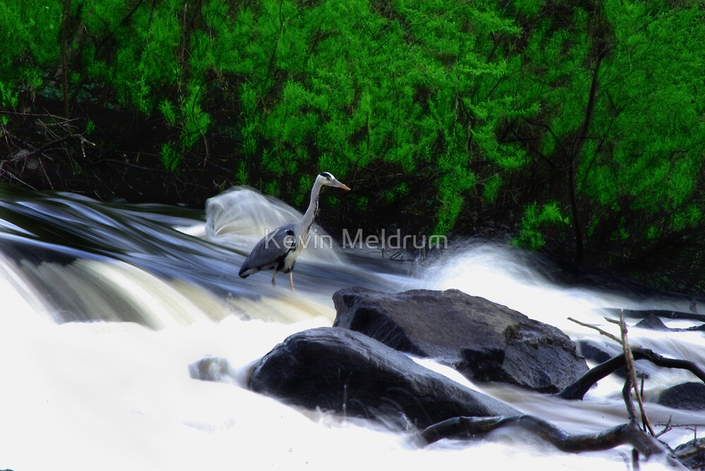 The Heron by Kevin Meldrum