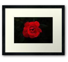 Crimson Lady  Framed Print