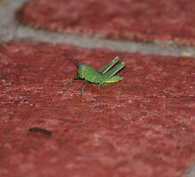 Jiminy by Jonathan Cassar