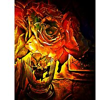 The Glasgow Roses Photographic Print