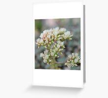 Springtime buds  Greeting Card