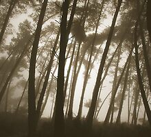 Trees in the haze by mechelle142
