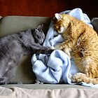 """Holding """"Hands"""" While They Sleep by Tracy Wazny"""