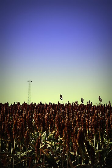 Sorghum Fields Forever by Trish Mistric