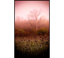 The Mist Photographic Print