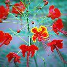 Burst of colour by robert murray