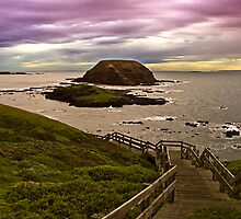Nobbies, Phillip Island, Victoria, Australia by Julia Harwood