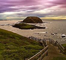 Nobbies, Phillip Island, Victoria, Australia by Julia Harwood