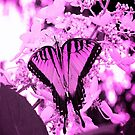 Little Miss Pink Butterfly by Jeff Johannsen