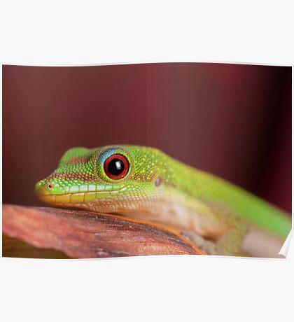 Gold dust day gecko (Phelsuma laticauda) Poster