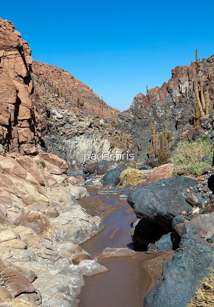 Guatin - Atacama Desert - Chile by parischris