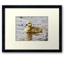 Golden Fluff Framed Print
