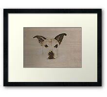 Molly Ham Framed Print